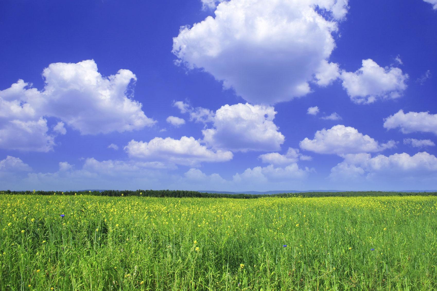 How do Refrigerants Impact Today's Environment?